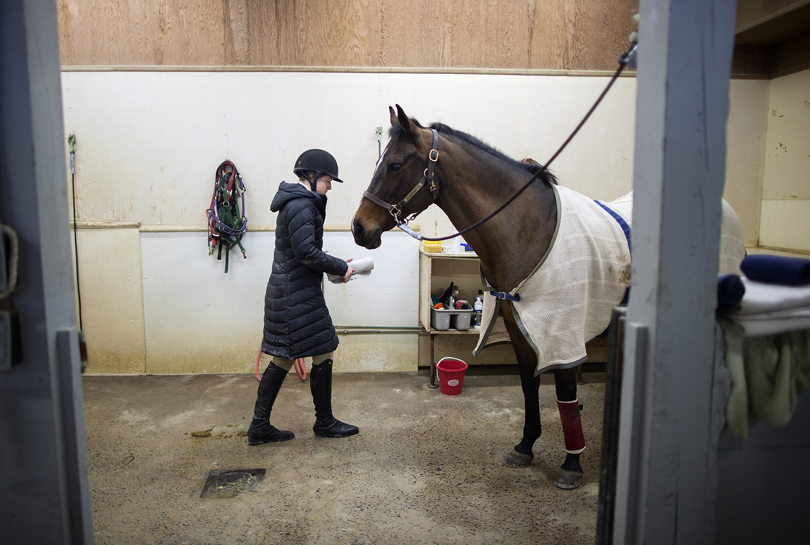 A woman in a winter jacket walks toward a blanketed horse in a barn aisle