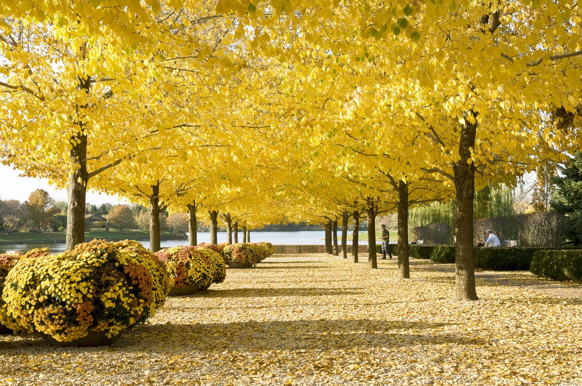 Chicago Botanic Garden Esplanade photographed by Robin Carlson