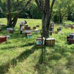 Beekeeping: A Love Affair