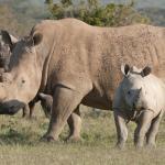 Leading the Trek Into Rhino Conservancy